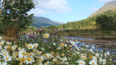 scotland_mountain_river_grass_daisies_109567_1366x768