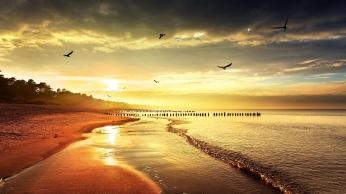 sea_beach_nature_birds_light_86175_1920x1080