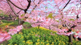spring_bloom_tree_flowers_93587_1920x1080