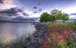 stones_flowers_trees_young_growth_reservoir_sky_clouds_colors_cloudy_emptiness_63406_2560x1600