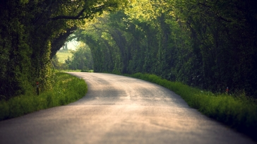 summer_nature_road_leaves_trees_90616_1920x1080
