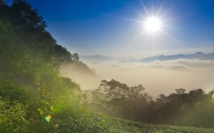 sun_light_patches_of_light_beams_sky_vegetation_fog_clouds_green_62655_1920x1200