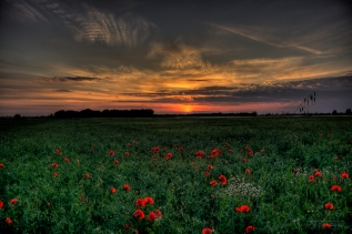 sunset_field_poppies_landscape_86153_4770x3177