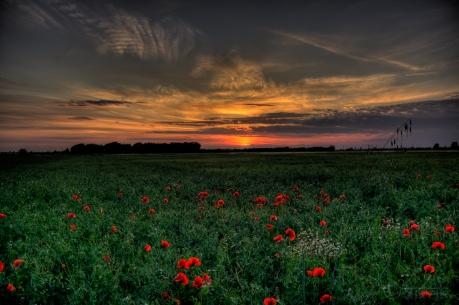 sunset_field_poppies_landscape_86153_4770x3177