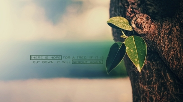 there-is-hope-for-a-tree-christian-wallpaper-hd_1366x768