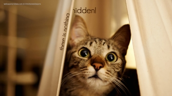 there-is-nothing-hidden-cat-christian-wallpaper-hd_1366x768