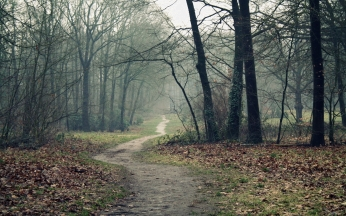 track_wood_leaves_earth_autumn_emptiness_fog_dampness_60179_2560x1600