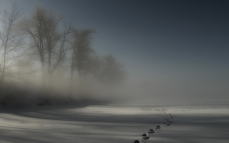 tracks_fog_snow_trees_darkness_night_drifts_cover_mystery_48146_2560x1600