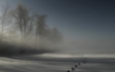 tracks_fog_snow_trees_darkness_night_drifts_cover_mystery_48146_2560x1600