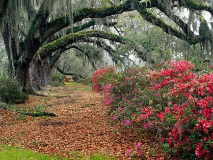 trail_trees_autumn_flowers_91044_1600x1200