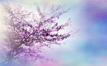 tree_branches_flowers_spring_luminescence_48278_1920x1200