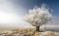 tree_branches_hoarfrost_gray_hair_protection_naked_dream_53167_1920x1200