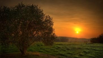 tree_decline_sun_silence_54659_1920x1080
