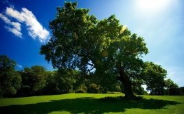 tree_glade_sun_patches_of_light_summer_42492_1920x1200