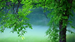 tree_leaves_summer_100591_1366x768