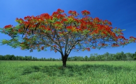 tree_lonely_shadow_krone_red_solarly_55495_1680x1050