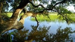 tree_summer_beautiful_82627_1366x768