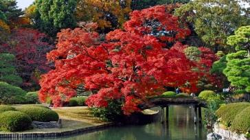 trees_autumn_beautiful_88024_1366x768