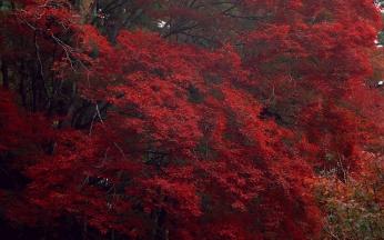 trees_autumn_dry_high_91445_1920x1200