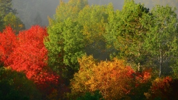 trees_autumn_foliage_fog_108395_1366x768