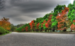 trees_autumn_green_red_alternation_expensive_53920_1920x1200