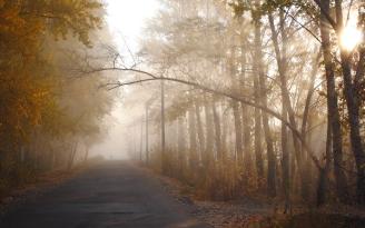 trees_autumn_haze_branch_path_silhouette_sun_light_62325_2560x1600