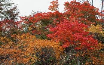 trees_autumn_nature_91433_1920x1200