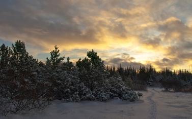 trees_fir-trees_snow_evening_sky_15174_1920x1200
