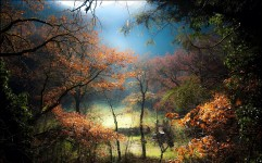 trees_fog_hill_lawn_forest_sunrise_103023_1920x1200