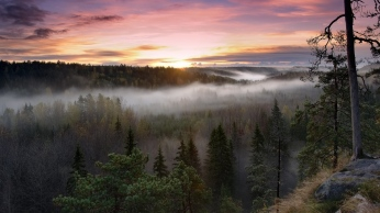 trees_fog_view_from_above_beautifully_86855_1366x768