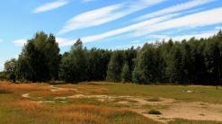 trees_forest_grass_autumn_109026_1366x768