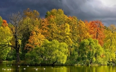 trees_lake_autumn_cloudy_clouds_coast_wefts_46657_1680x1050
