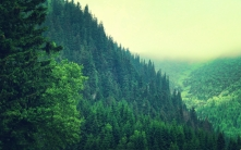 trees_mountains_sky_summer_79369_2560x1600