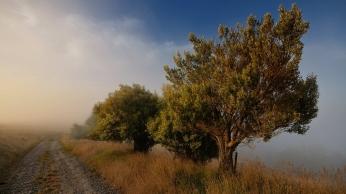 trees_road_fog_blue_sky_54963_1920x1080