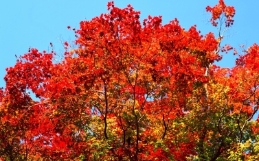trees_sky_autumn_leaves_91389_1920x1200