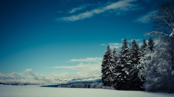 trees_snow_winter_glade_height_mountains_gloomy_48283_1920x1080