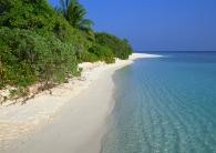 tropics_beach_palm_trees_summer_90645_2950x2094
