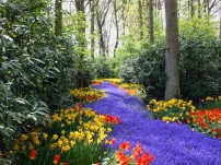 tulips_narcissuses_yellow_red_lilac_flowers_trees_5690_1600x1200