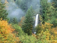 waterfalls_trees_greenery_fall_91435_1600x1200