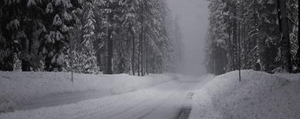 winter_road_snow_fir_grove_panorama_60702_2560x1024 (1)