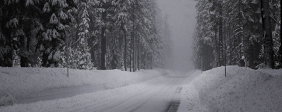 winter_road_snow_fir_grove_panorama_60702_2560x1024