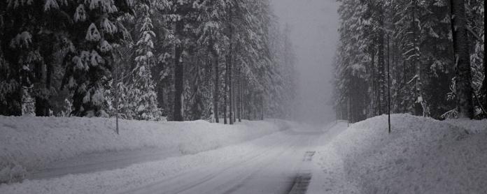 winter_road_snow_fir_grove_panorama_60702_2560x1024