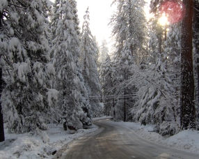 winter_road_snow_fur-trees_4708_1280x1024