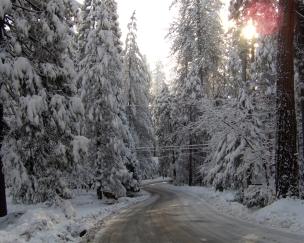 winter_road_snow_fur-trees_4708_1280x1024