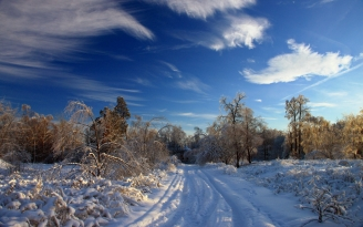 winter_snow_road_traces_bushes_trees_snowdrifts_clouds_sky_clear_47208_2560x1600
