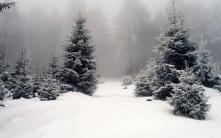 winter_wood_fir-trees_fog_53411_1920x1200