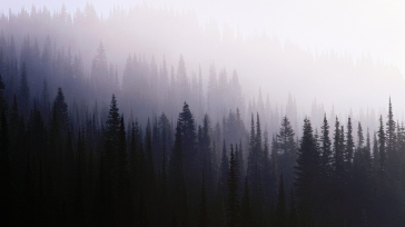 wood_background_coniferous_darkness_fog_haze_57316_1366x768