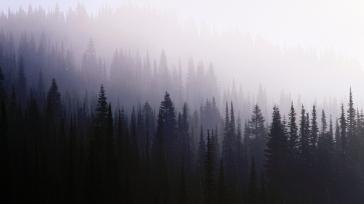 wood_background_coniferous_darkness_fog_haze_57316_1366x768