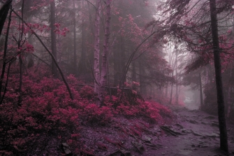 wood_fog_lilac_grass_trees_mysterious_60681_4272x2848