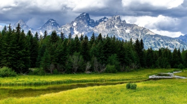 wood_stream_mountains_cloudy_fir-trees_grass_summer_60848_1366x768